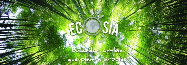 Ecosia, tu nuevo buscador on-line que planta árboles   Photo by Kazuend   Unsplash