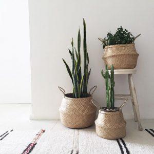 capazos con plantas
