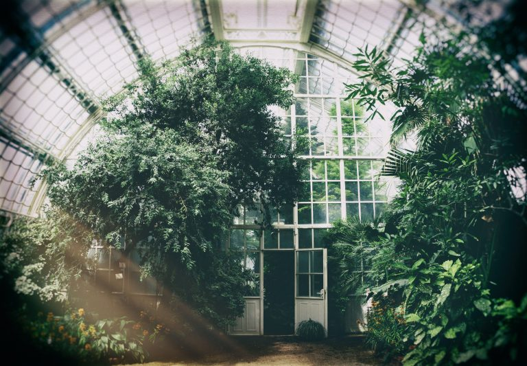greenhouse | glasshouse | Photo by Phillipp Deus | Pexels