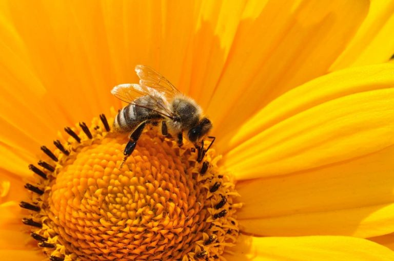 Save the bees for a better world